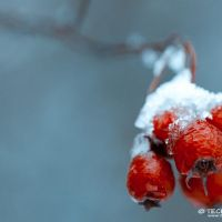 The Images of Winter